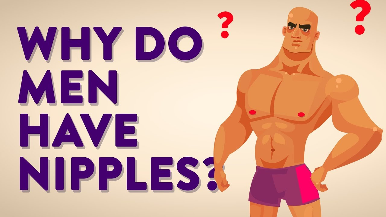 Why Do Men Have Nipples? Can Men Breastfeed and Who Are The Milkmen ...