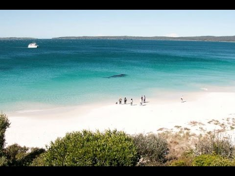 Jervis Bay. One of Australia's most beautiful beaches