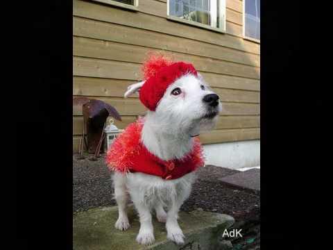 Hondenjassen Deel 2 Youtube