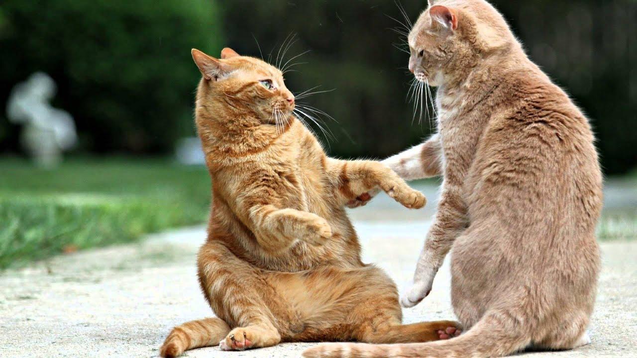 Кот и два котенка