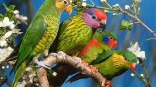 The secret language of birds - Ian Anderson