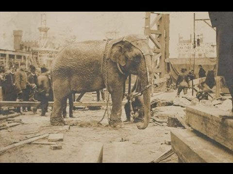 THE EXECUTION OF TOPSY THE ELEPHANT
