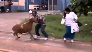 Hər kəsə hücum edən keçi