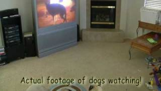 Dvd For Dogs Thedvdfordogs: The Ultimate Dog Sitter Dvd