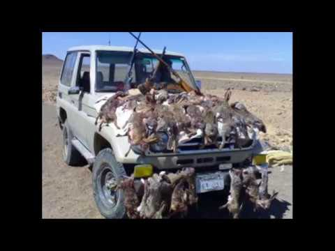 balochistan bloachan ni digharen by sabz ali bugti balochi best singer