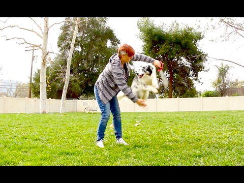 Jump Though a Hoop! - Dog Tricks Training