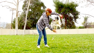 Jump Though a Hoop!  Dog Tricks Tutorial   Dog Training by Kikopup