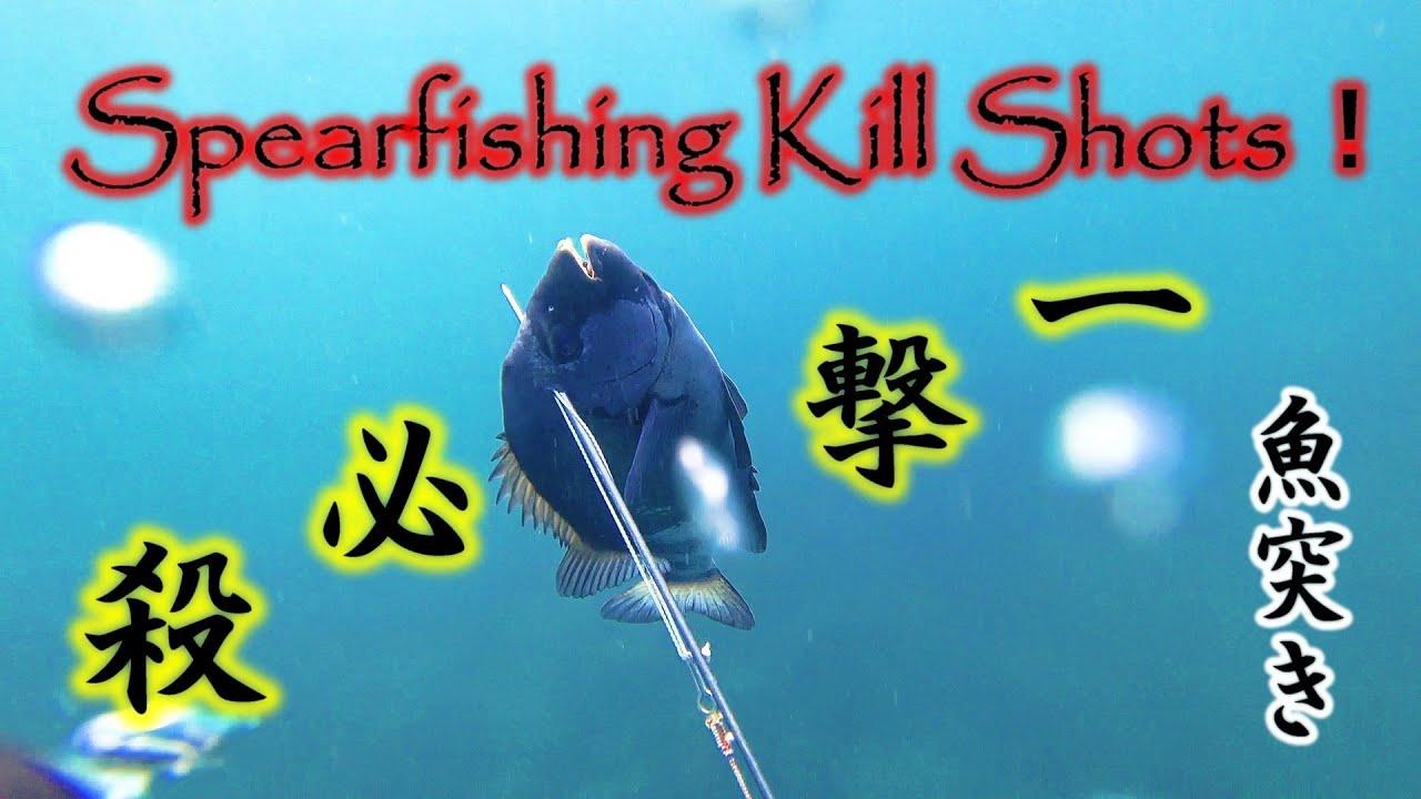 魚キルショットの瞬間【魚突き】KILL SHOTS!