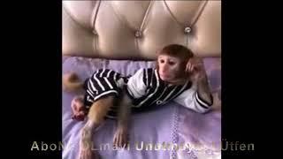 Küstüm maymun part 2 Dayanamiyorum Dertli :)