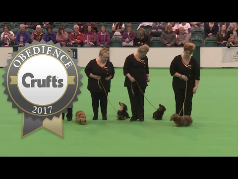 Obreedience Group Heelwork - Part 2 | Crufts 2017