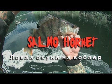 Ловля большого окуня на воблер Salmo Hornet