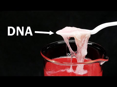 Download Youtube: What is DNA and what does it taste like? | Edible Chem