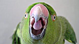 ТОП-29 пород попугаев