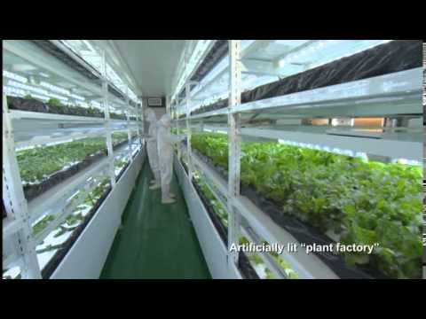 Agriculture in Taiwan —Rich and Enriching— (15 min.)
