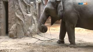 Die Grenzen der Freiheit | Elefant, Tiger & Co. (604) | MDR