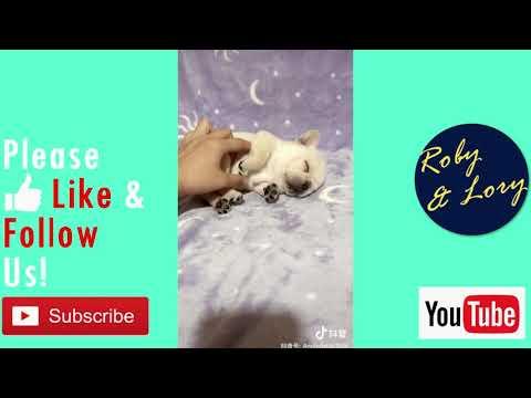Nikkie Is Just Sleeping | Nikkie The Bulldog thumbnail