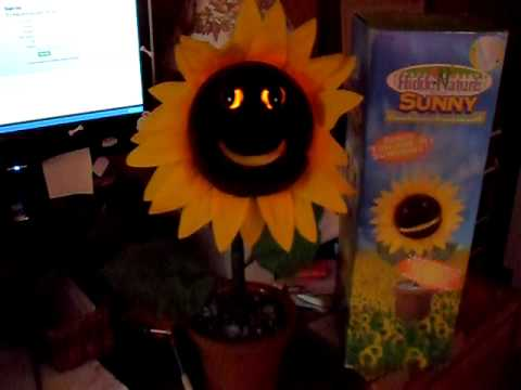 Sunny The Singing Sunflower Youtube