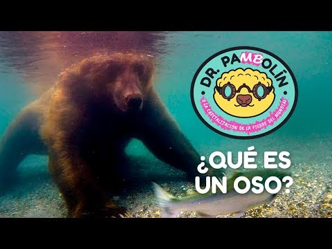 ¿Qué es un oso? - Dr. Pangolín y su Ejército de Animalitosbebé