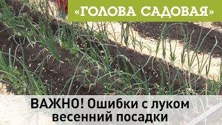 Голова садовая - ВАЖНО! Ошибки с луком весенний посадки