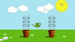 [Animation] Dy Nguyen_How faire pousser des tomates dans pots_1st Vidéo d'Animation