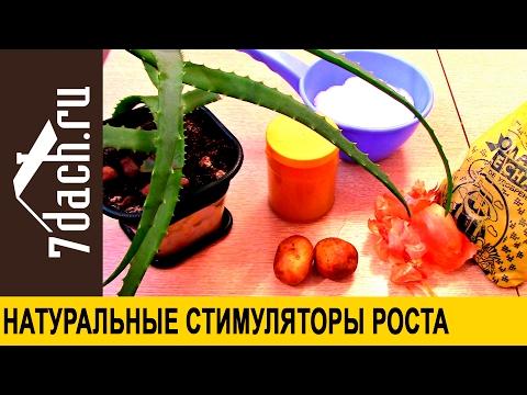 Как приготовить стимуляторы роста из алоэ, картофеля, золы, луковой шелухи и меда  - 7 дач
