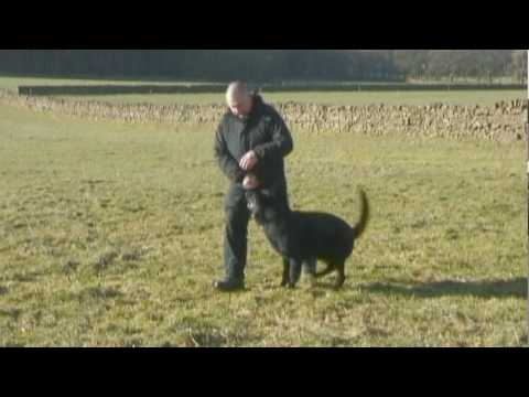 Cumbria Police Puppies - Part 2 - Training - Growing Up