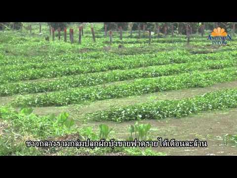 ADMTV ปลูกผักบุ้งเงินล้าน