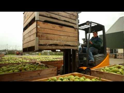 Vers 24/7 - Appels & Peren