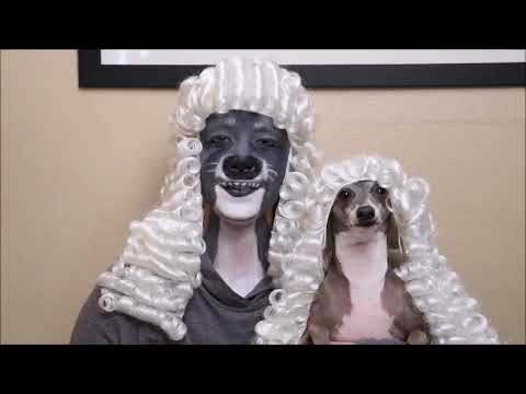 kermit the dog - YouTube