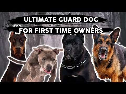 The BEST GUARD DOG BREED For First Time Owners!