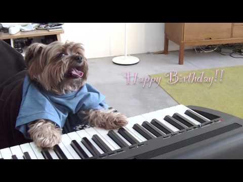 play that birthday, keyboard dog - YouTube