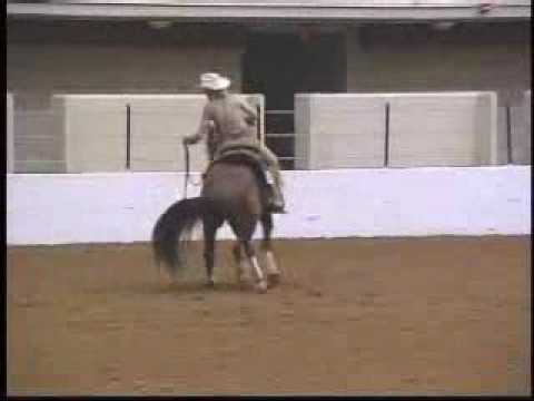 reining-horse-for-sale