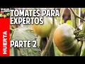 3 Metodos para Prevenir Enfermedades en el Cultivo Tomates @cosasdeljardin
