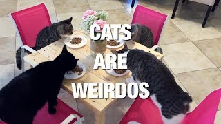 Cats Prove Why They Are The Strangest Pets