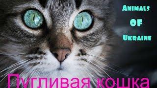 Пугливая кошка.Skittish cat .