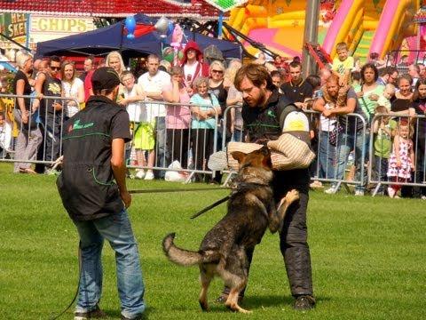 Schutzhund in Action Working Dog Show