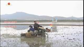Rice planting works