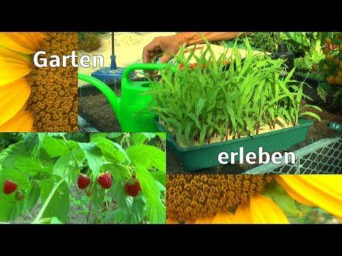 Garten erleben anfang August Wachstum Düngen und Symbiose von Tier und Pflanze
