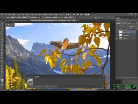 Kako Napraviti Pokretnu Sliku (GIF)