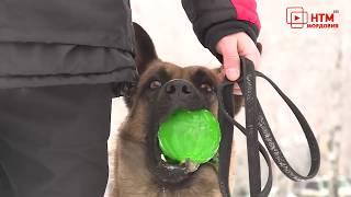 В Саранске откроют площадки для выгула собак