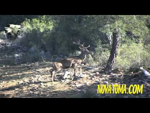 Vídeos Caza, MONTERIAS EN CASTILLA (parte 3). Hunting Video