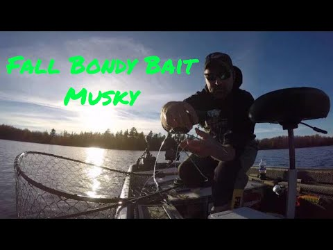 Fall Bondy Bait Musky