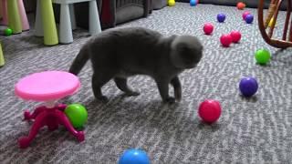 Новая игрушка для кошечки Буси. Video with cat Busia