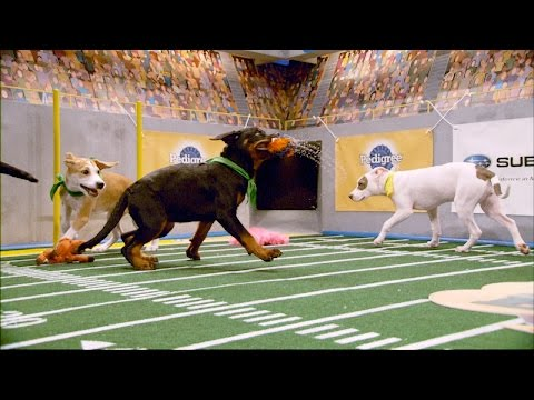 Leah Scores One Soggy Touchdown | Puppy Bowl XII