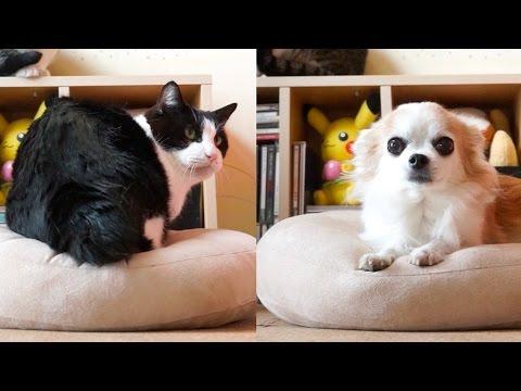 【犬猫編】モチモチクッション