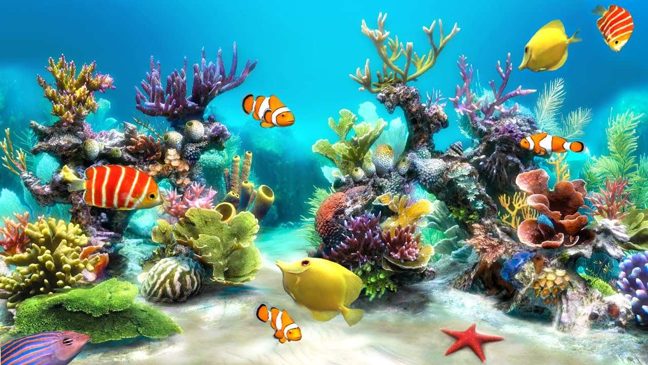Sim Aquarium 3d Android Video Review By Stelapps Youtube