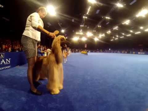 The National Dog Show (2016) - Hounds Preview