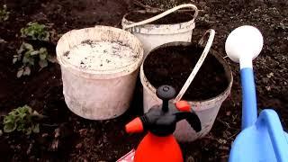 подкормка клубники  обработка клубники весной 2016(подкормка клубники обработка клубники весной как и чем обработать и подкормить клубнику подготовка грунт..., 2016-04-22T10:47:57.000Z)