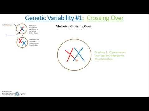 Genetic Variability Crossing Over
