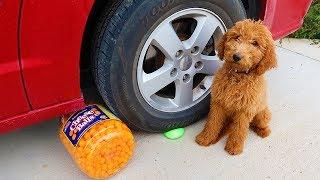 Crushinging Things with Car! Zoey's FUN Experiment: RUBIK'S CUBE VS CAR